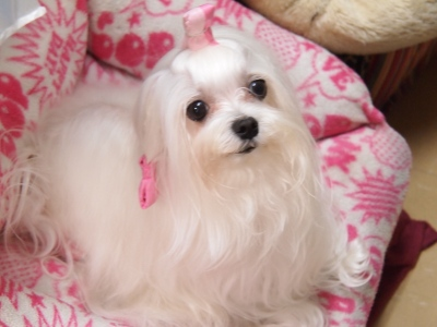 ピンクちゃんの長~い前髪…_b0001465_1528980.jpg