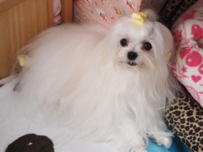 ピンクちゃんの長~い前髪…_b0001465_15292171.jpg