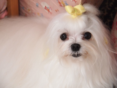 ピンクちゃんの長~い前髪…_b0001465_15294766.jpg