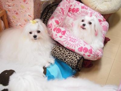 ピンクちゃんの長~い前髪…_b0001465_15303885.jpg