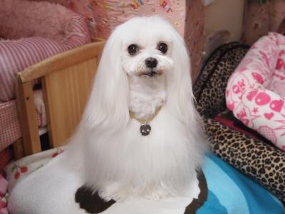 ピンクちゃんの長~い前髪…_b0001465_15313749.jpg