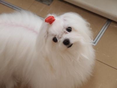 ピンクちゃんの長~い前髪…_b0001465_15332581.jpg