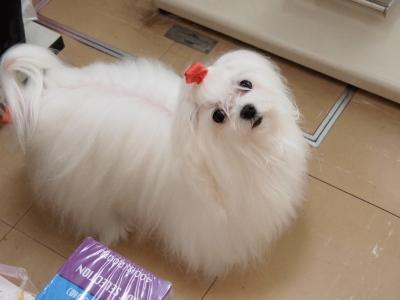 ピンクちゃんの長~い前髪…_b0001465_15335857.jpg