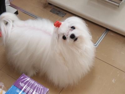 ピンクちゃんの長~い前髪…_b0001465_15342080.jpg