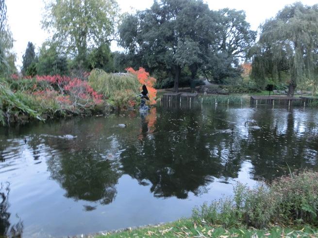 水鳥が戯れる池の日本庭園:ロンドン・リージェンツパーク_c0155158_15313777.jpg