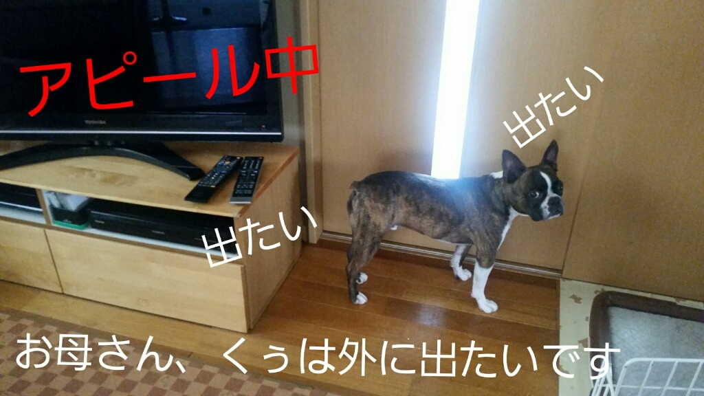 c0326807_21450614.jpg