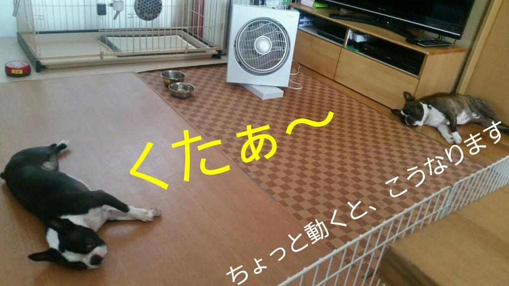 c0326807_21450973.jpg