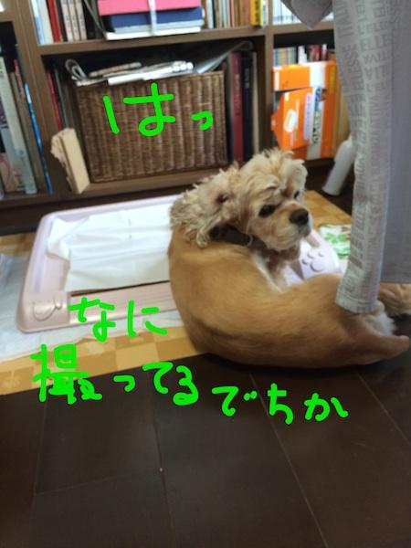 b0067012_1573948.jpg