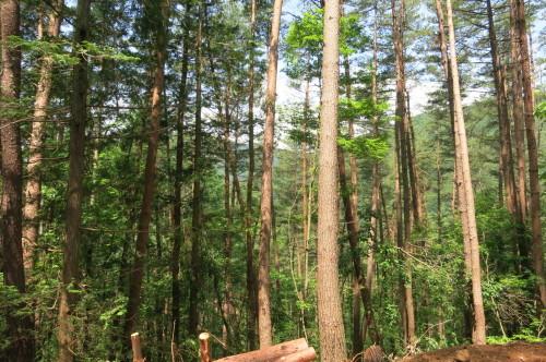 塩尻市の森林_c0116631_08035591.jpg
