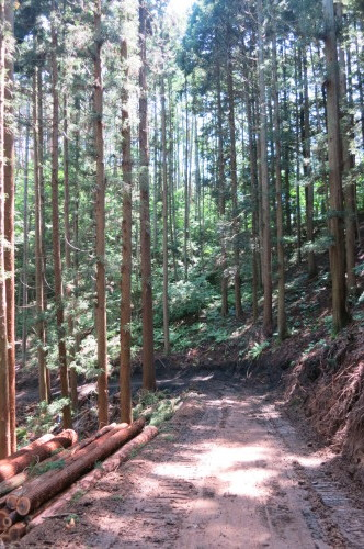塩尻市の森林_c0116631_08041661.jpg