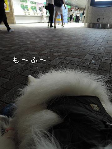 c0062832_10303110.jpg
