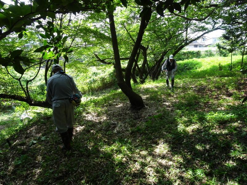 10本桜周辺の草刈り・・・うみべの森_c0108460_18264771.jpg
