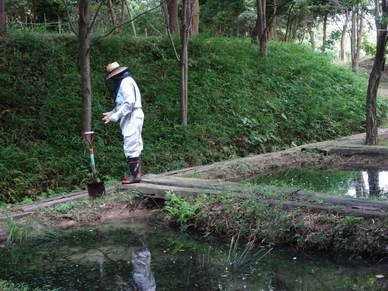 10本桜周辺の草刈り・・・うみべの森_c0108460_18265336.jpg