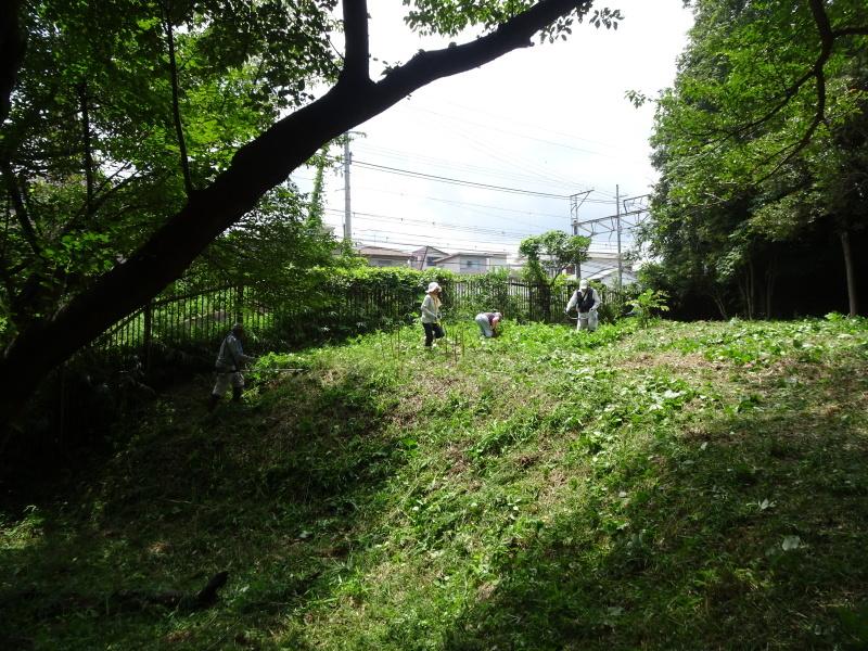 10本桜周辺の草刈り・・・うみべの森_c0108460_18280709.jpg