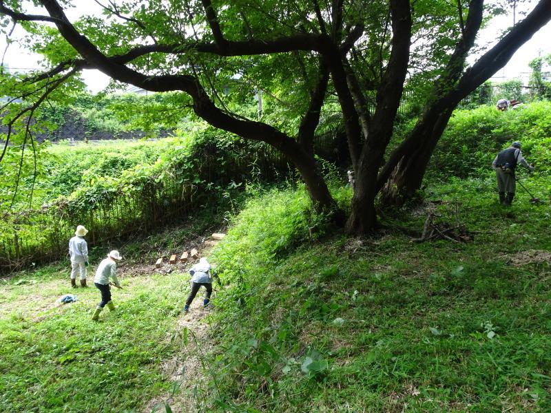 10本桜周辺の草刈り・・・うみべの森_c0108460_18281157.jpg