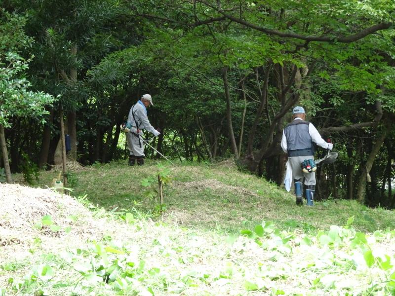10本桜周辺の草刈り・・・うみべの森_c0108460_18322672.jpg