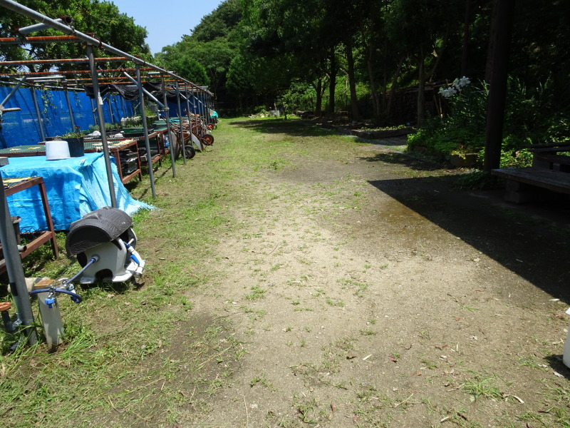 10本桜周辺の草刈り・・・うみべの森_c0108460_18412231.jpg