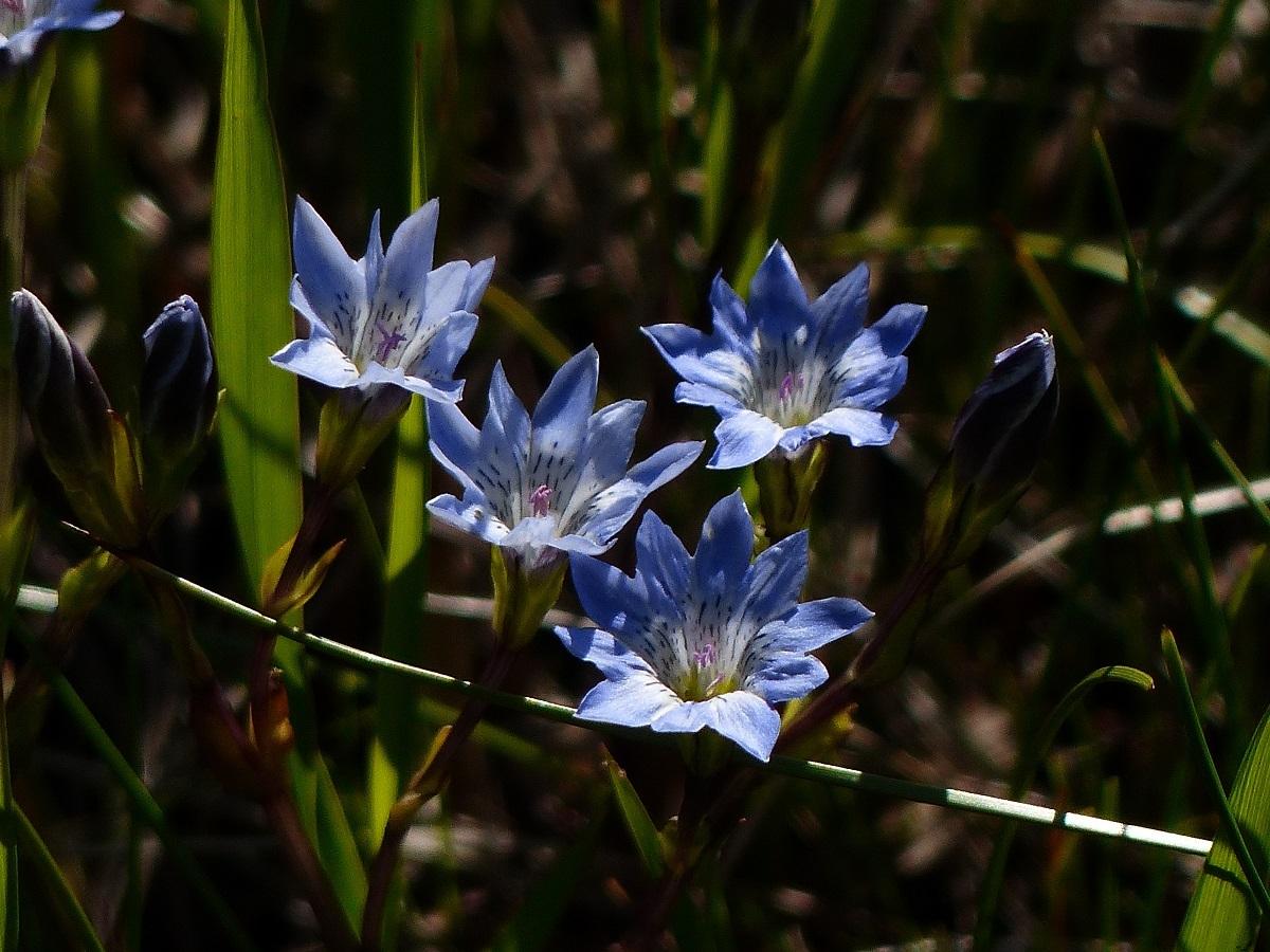 燧ケ岳の高山植物_a0351368_09192992.jpg