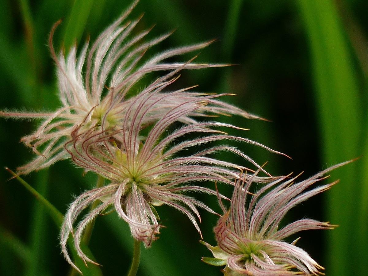 燧ケ岳の高山植物_a0351368_09370376.jpg