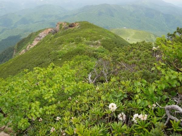燧ケ岳の高山植物_a0351368_11080174.jpg