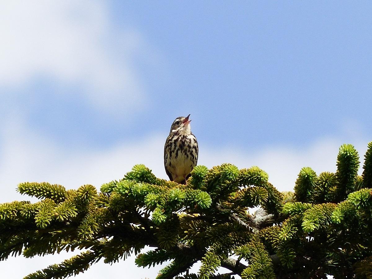 燧ケ岳の高山植物_a0351368_12360197.jpg