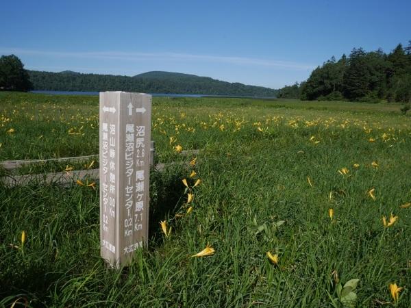 尾瀬 大江湿原のニッコウキスゲ_a0351368_13041962.jpg