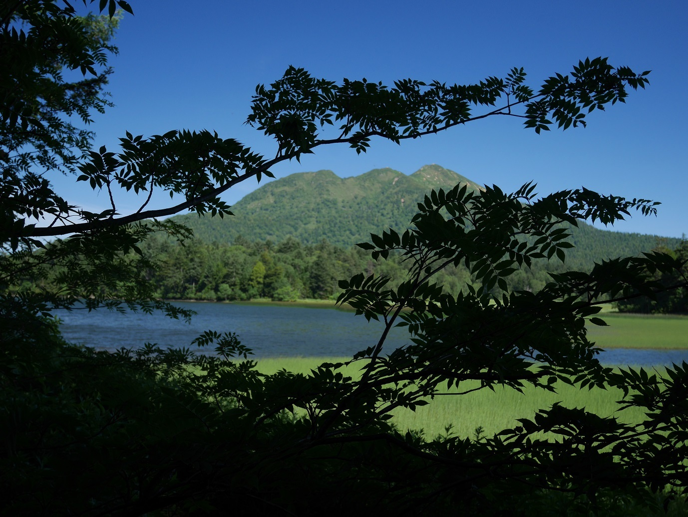 尾瀬 大江湿原のニッコウキスゲ_a0351368_13050779.jpg