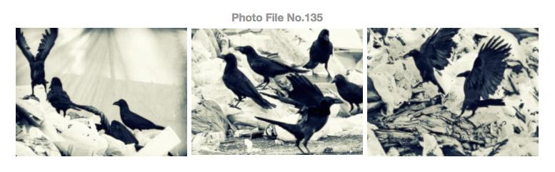STUDIO M2 Photo File No.135 「カラス ~ 春 ~ お花見パーティ」_a0002672_9584948.jpg