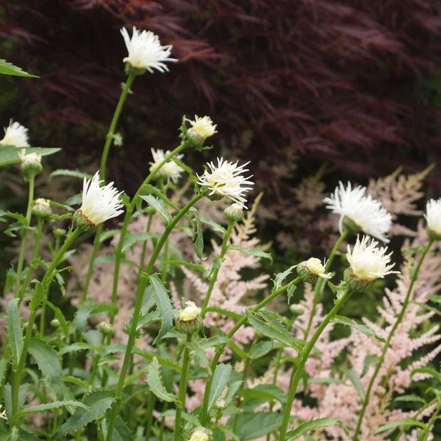 お庭は花盛り_a0292194_17221691.jpg