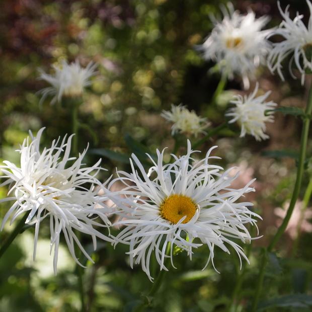 お庭は花盛り_a0292194_17234391.jpg