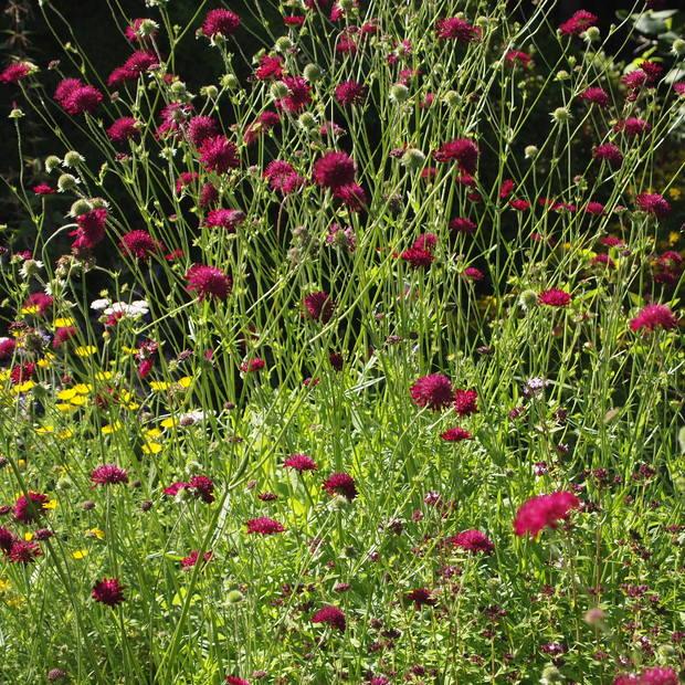 お庭は花盛り_a0292194_17261171.jpg
