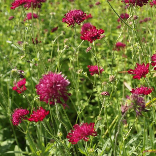 お庭は花盛り_a0292194_17275990.jpg