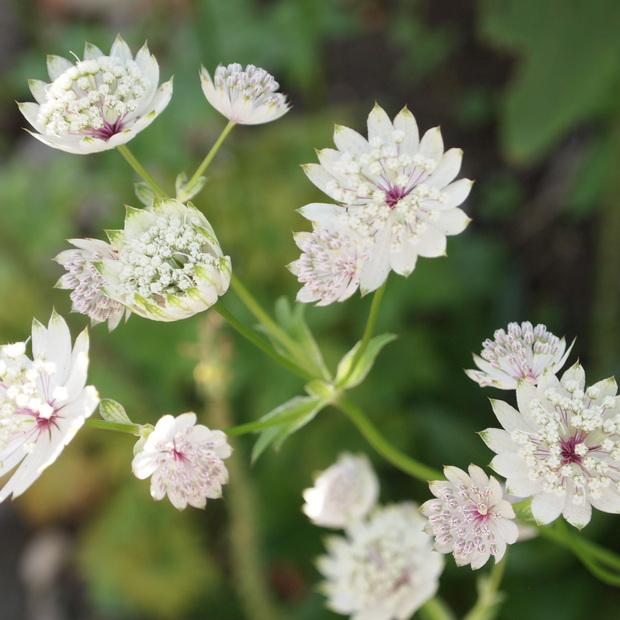 お庭は花盛り_a0292194_17333374.jpg
