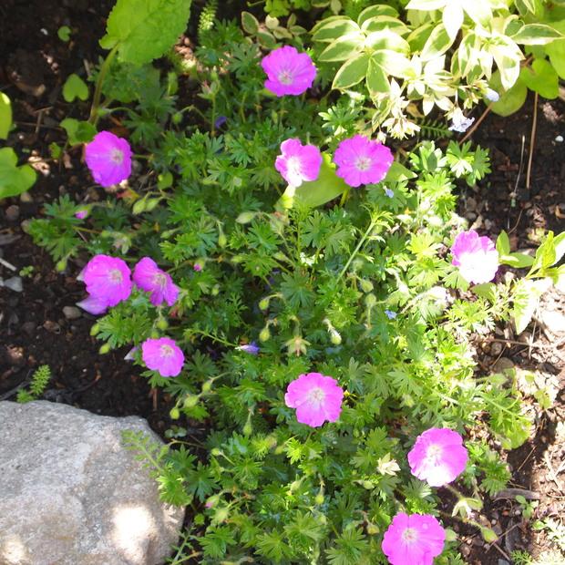 お庭は花盛り_a0292194_17364385.jpg