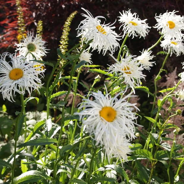 お庭は花盛り_a0292194_1744630.jpg