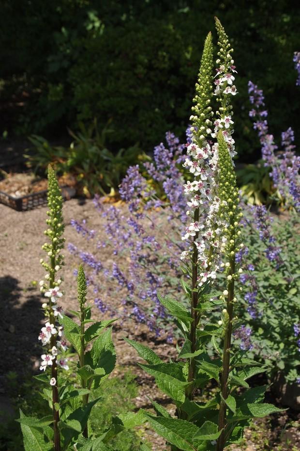お庭は花盛り_a0292194_17534661.jpg