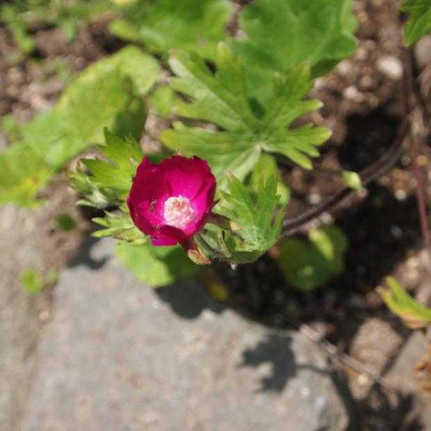 お庭は花盛り_a0292194_1757096.jpg