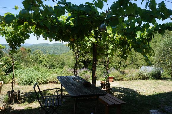 キッチン前の葡萄の木_f0106597_16384058.jpg