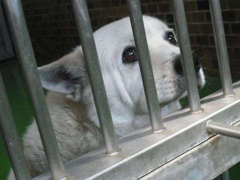 犬を飼う (保護された犬を迎えよう)_d0073743_10484430.jpg