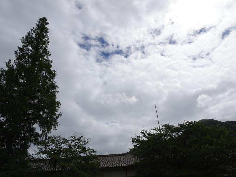 涼しいので間伐作業をしました・・・孝子の森  by  (TATE-misaki)_c0108460_21491970.jpg