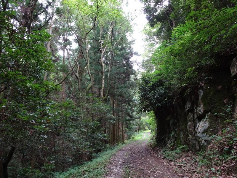 涼しいので間伐作業をしました・・・孝子の森  by  (TATE-misaki)_c0108460_21492133.jpg