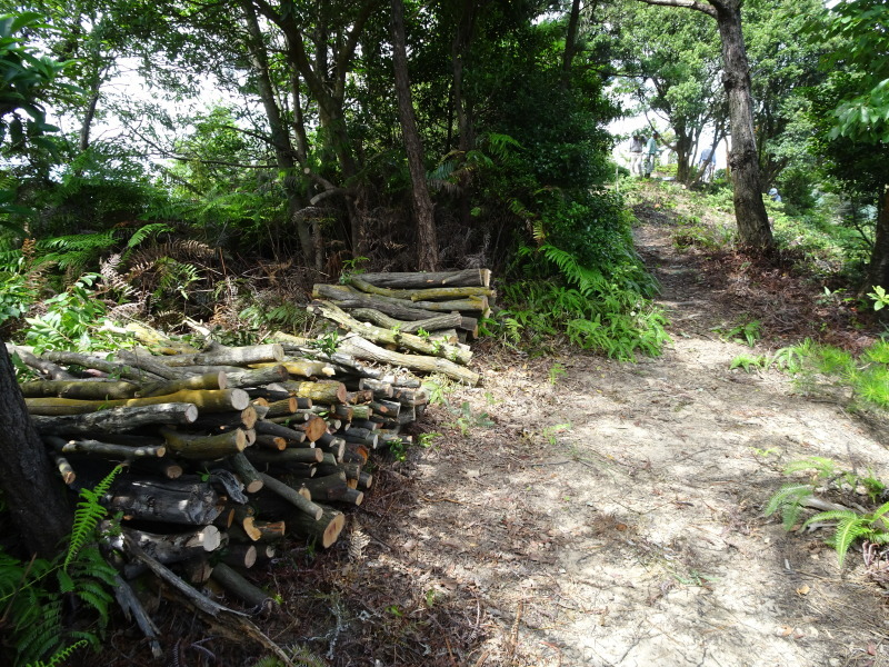 涼しいので間伐作業をしました・・・孝子の森  by  (TATE-misaki)_c0108460_22083064.jpg