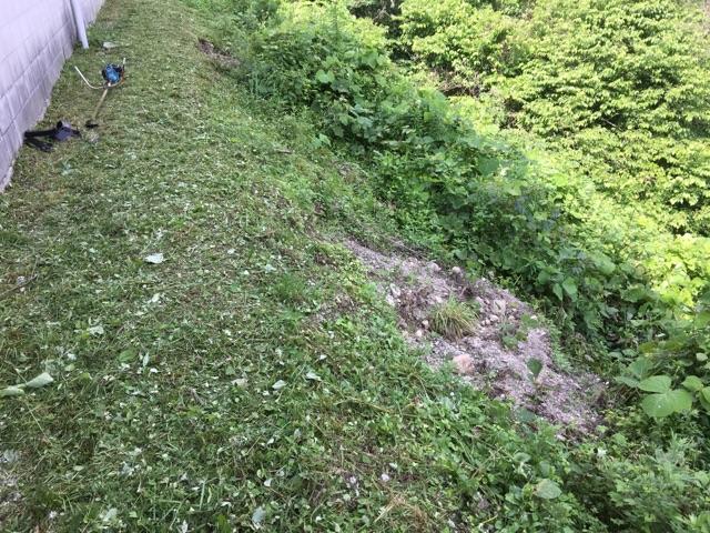 草刈りの季節_f0073301_16133813.jpg
