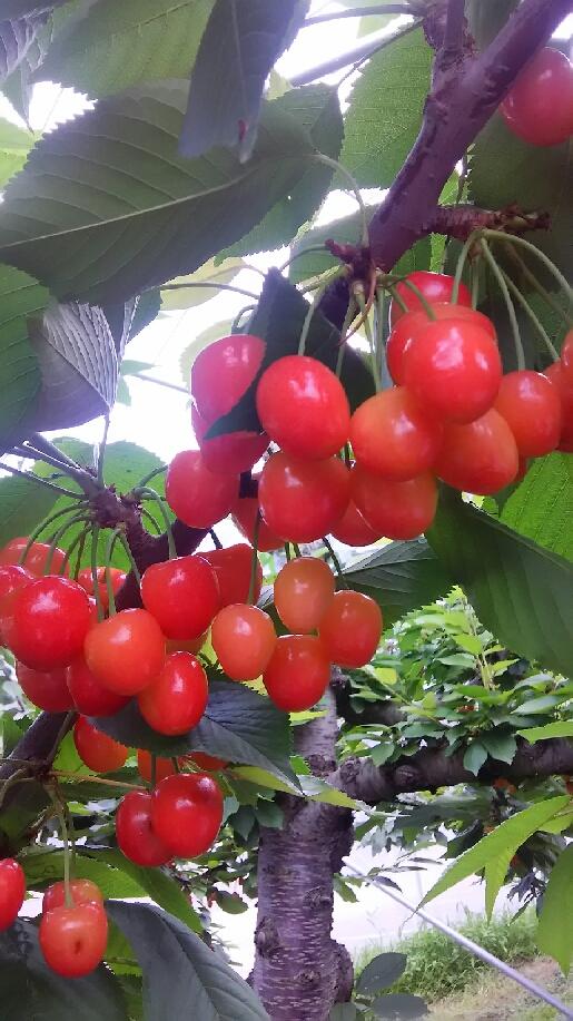果物を訪ねて②_d0154707_14374062.jpg