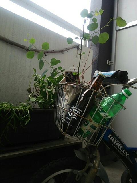 お気に入りの錆び自転車と kashicoroさんへ納品_c0267235_21333839.jpg