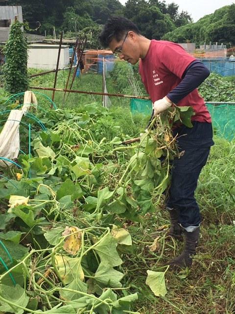 一昨日 昨日の豪雨で・・多くのトマトが割れましたが なんのその・・ハーブを雑草から救出_c0222448_14310519.jpg