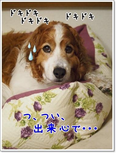 d0013149_00101116.jpg