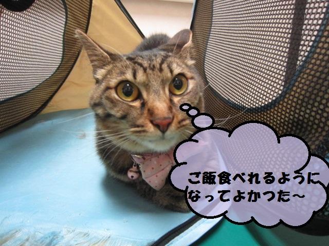 【ネコちゃん急性腎不全から復活】_b0059154_1675263.jpg