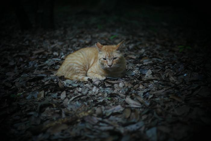 猫にゃん_f0021869_0145631.jpg