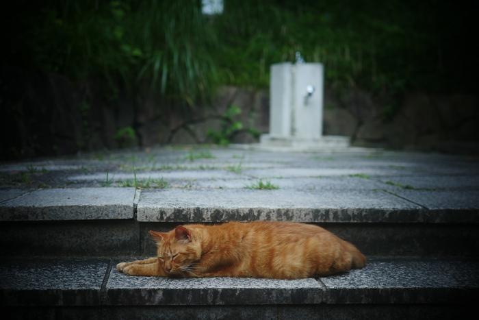猫にゃん_f0021869_0153279.jpg